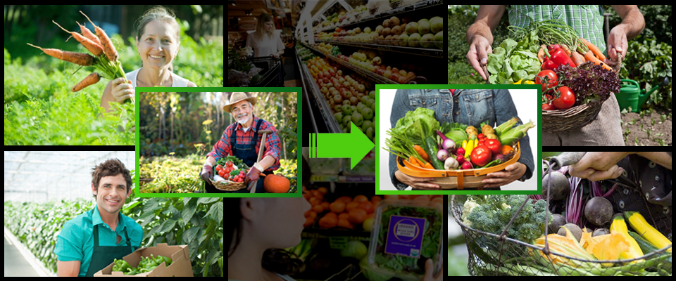 Grupos de consumo de alimentos y productos ecológicos en La Guarida Creativa